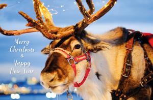 Gelegenheidsdrukwerk kerstkaarten Bode van Schoten